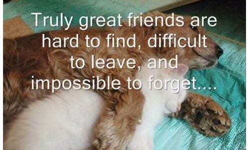 Best friends forever quotations!