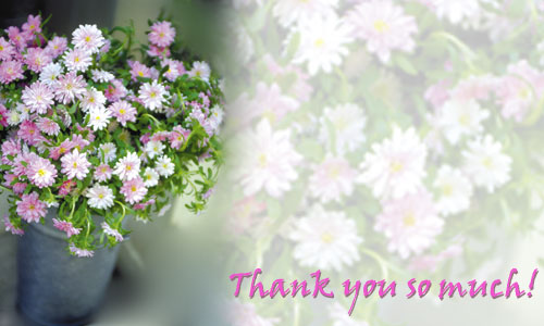 Beautiful Thank You Cards send ecards: thank you | a beautiful thank you note.