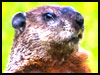Happy Groundhog Day! - Groundhog Day ecards - Events Greeting Cards
